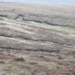 NNAS Course participants on Moorland